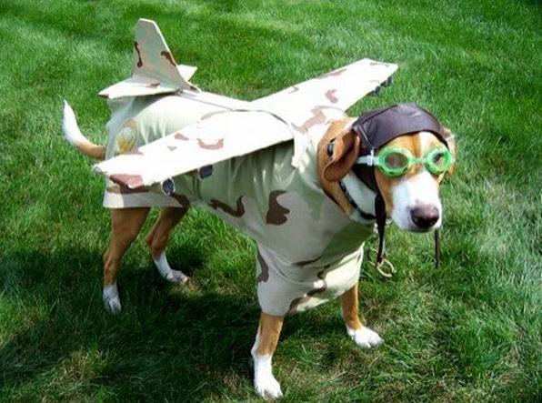 letajici-pes